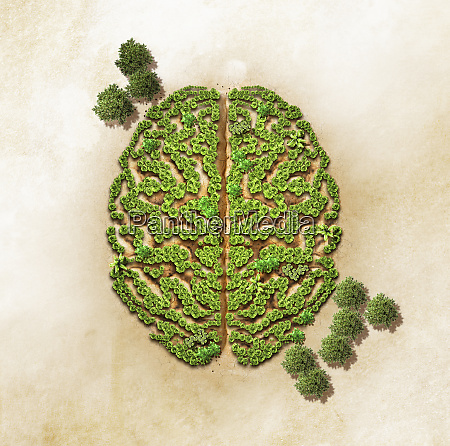 green trees forming brain