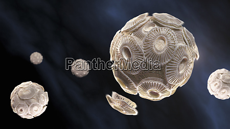 illustration von emiliania huxleyi phytoplankton