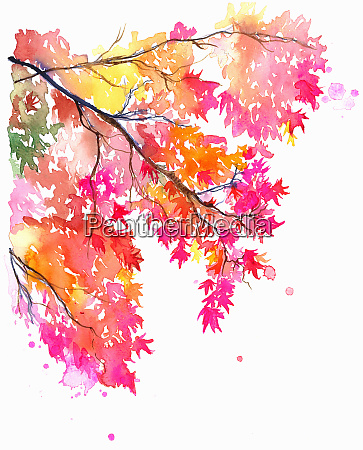 branch of bright colorful maple leaves