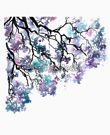 branch of purple and blue jacaranda