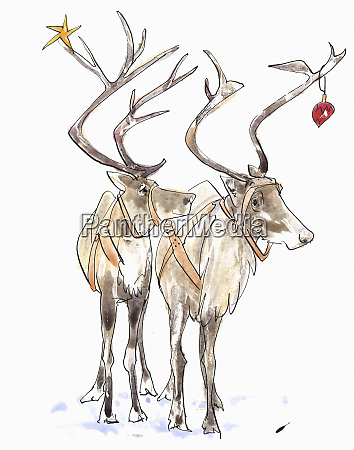 pair of reindeer with christmas decorations