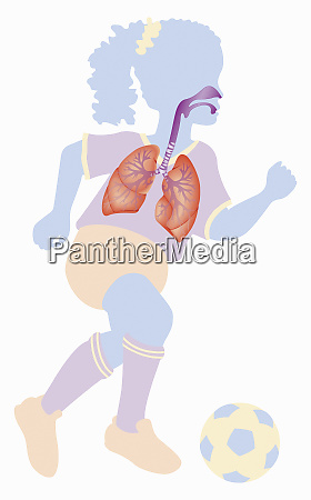 biomedical illustration of respiratory system of