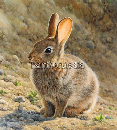 braunes kaninchen im sonnenschein