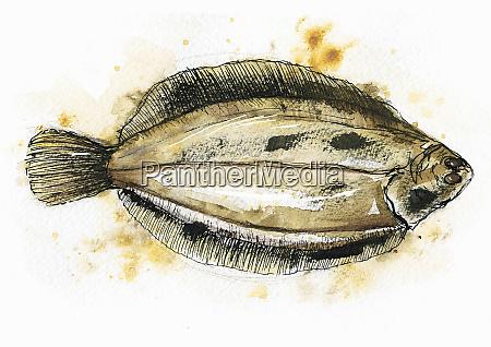 schluss mit flachen fischen