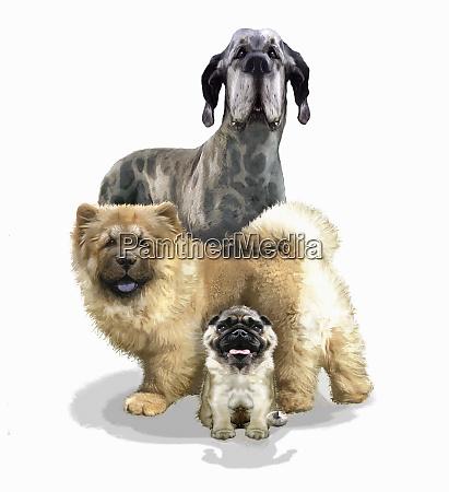 drei verschiedene hunderassen mit blick auf