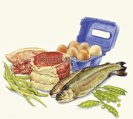 lebensmittel mit eiweiss fleisch fisch eiern