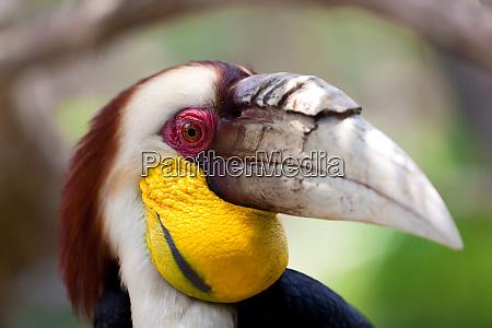 hornbill vogel wildes leben natur tier