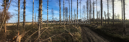 broken forest trees in a