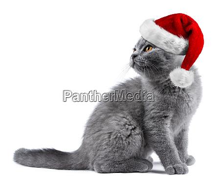 kaetzchen mit rot weissem weihnachtssanta hat