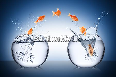 konzept der fischaenderung