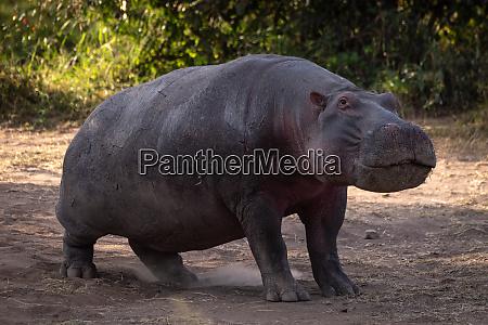 afrika safari tier tierwelt kenia kicheche