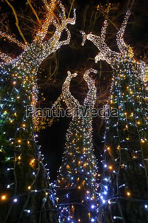 illuminated ornated tree at night