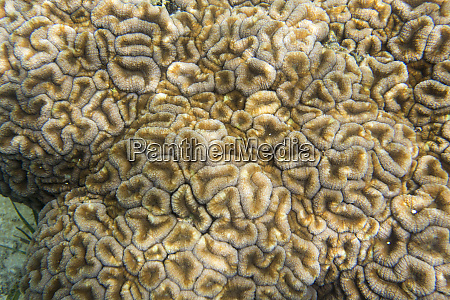 tropische korallentextur