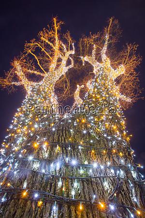 decorated illuminating tree