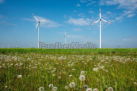 windkraftanlagen und loewenzahnblumen in deutschland