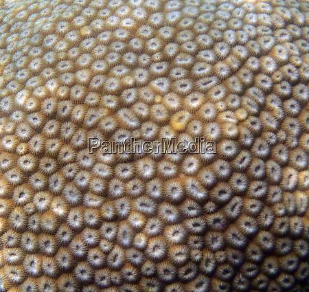 eine tropische korallentextur
