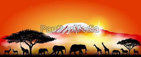 savannah animals on the background of