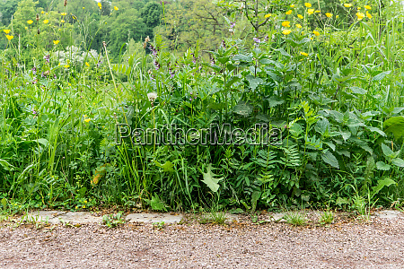 verschiedene, wildpflanzen - 26142387