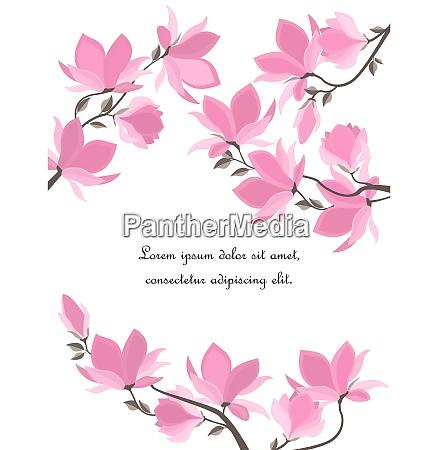 vector magnolia blumen