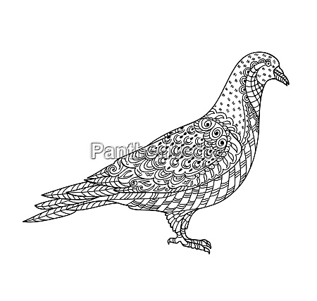 drawing zentangle pigeon for coloring book