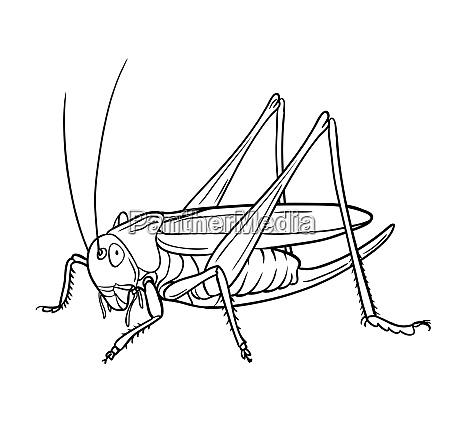 grasshopper hand drawn style vector