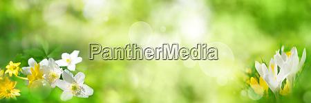 gruener fruehlingshintergrund mit blumen