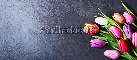 fresh flowers on dark background with