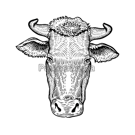 cows head in a graphic style