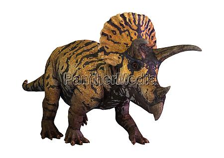 3d rendering dinosaur triceratops on