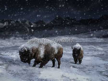 3d darstellung von zwei majestaetischen bisons