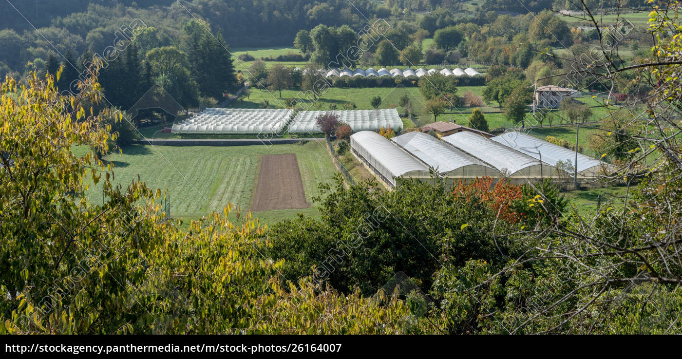 vegetable, and, fruit, growing, areas - 26164007