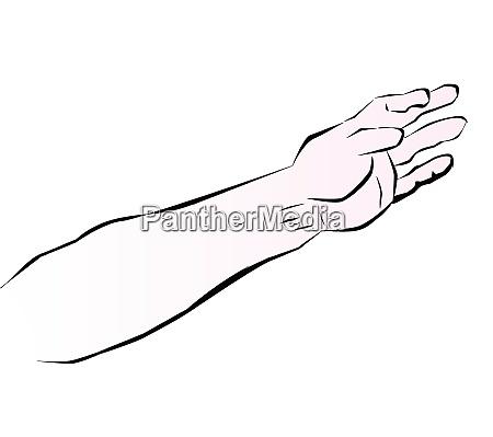 menschliche arm