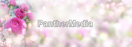 rosen auf pastellfarbenem fruehlingshintergrund