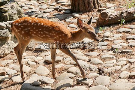 national antilope gazal schoen landschaft antilope