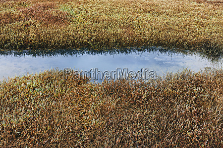 detail of intertidal wetlands and water
