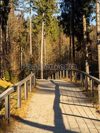 landschaftsbild aus dem nationalpark in bayern