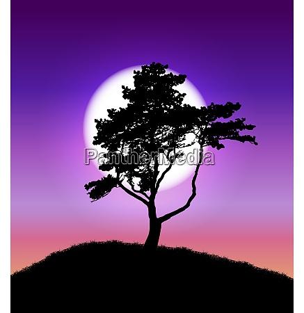 silhouette, des, baumes, auf, sonnenuntergang, hintergrund. - 26250362