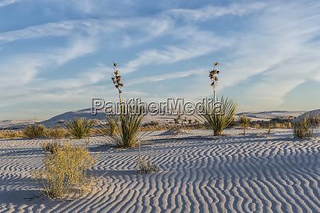 white sands national monument alamogordo new