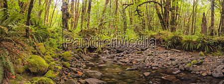 stream running through a lush rainforest