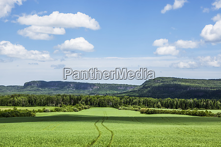 lush green farm field with mountains