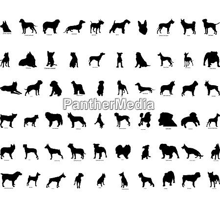 grosse sammlung vektor silhouetten von hunden