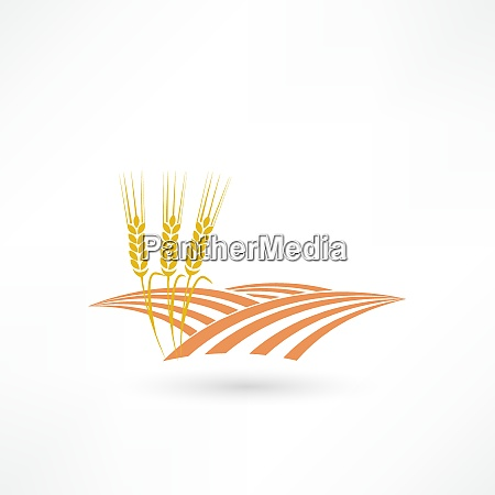 grain field icon