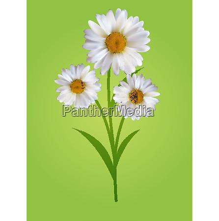 colorful naturalistic beautiful 3d chamomile background