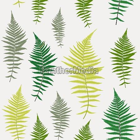 fern leaf vector fern leaf vector