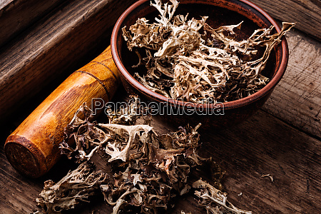 dried icelandic medicinal moss
