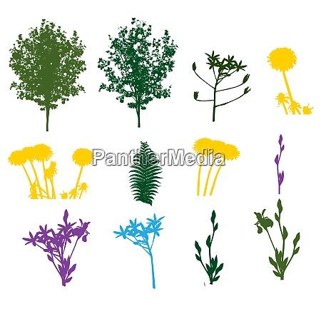 set of plant tree foliage elements