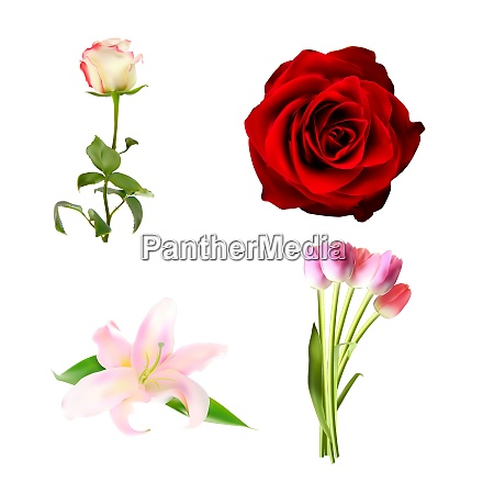 realistic flower set high quality vector