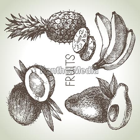 von hand gezogenes skizzenfrucht set OEko
