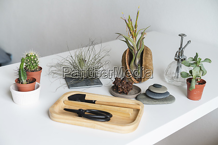 variation of succulent plants and gardening