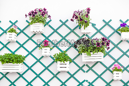 decorated with potted plants on wall